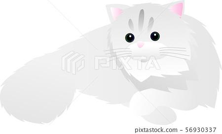 波斯貓 56930337