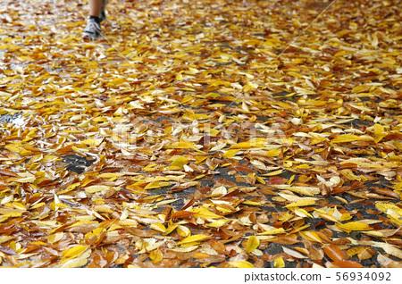 숲속산책로, 가을단풍, 56934092
