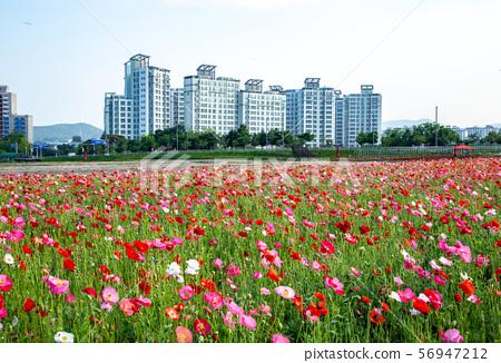 꽃길과아파트 56947212