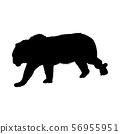 Tiger Silhouette 56955951