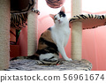 The lonely cat which is sitting under a cat tree. 56961674
