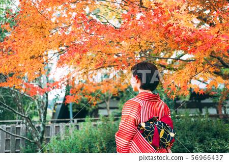秋季葉子和和服婦女 56966437