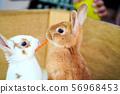 먹이를주고 토끼 페팅 56968453