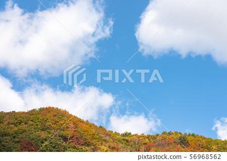 秋天的景色 56968562