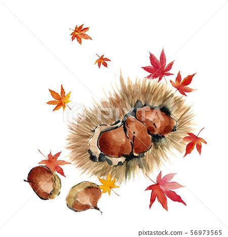 栗子用大蒜,槭樹,水彩 56973565