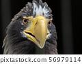 독수리의 얼굴 56979114