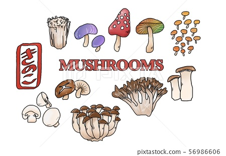 Mushrooms various materials 56986606
