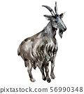 Goat fafm animal isolated. Watercolor background illustration set. Isolated animal illustration 56990348