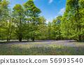 Blue Bell Forest สหราชอาณาจักร 56993540