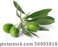 올리브 가지와 열매 56993818