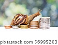 Brown snail climbing  the pile of coins with natural Bokeh  background  , Victory and success from patience  , Slow economic growth , Development financial and commit business concept 56995203