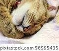 Oh sleepy 56995435