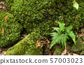 Fern and mossy stones 57003023