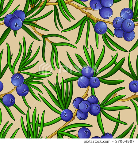 juniper vector pattern 57004987