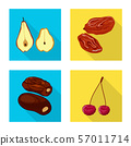 Vector design of fruit and dried symbol. Collection of fruit and food vector icon for stock. 57011714