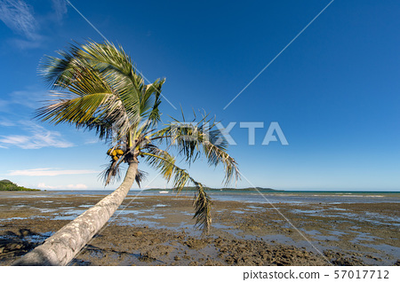 New Caledonia, Mont d'Or, Corniche coastal low tide and palm trees 57017712