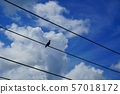 Thunderhead, electric wire and crow 57018172