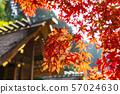 The outer shrine main shrine and autumn leaves Hyuga Ojingu 57024630