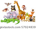 Cute animals on white background 57024839
