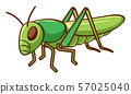 Green cricket on white background 57025040