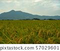 Mt. Tsukuba 57029601
