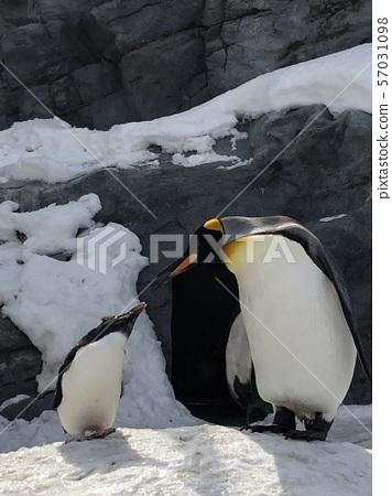 A good friend penguin 57031098