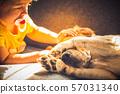 dog, pet, animal 57031340