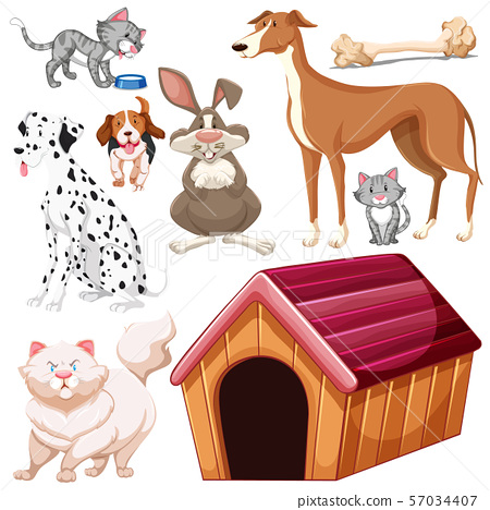 Set of isolated different pets 57034407