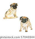 Watercolor pugs dogs 57040944