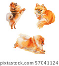 Watercolor pomeranian spitz dogs 57041124