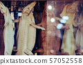 The whole young crocodile leather is hung for sale to be used in stuffed animals in Vietnamese souvenir shops. 57052558
