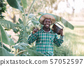 African farmer man holding banana branch and 57052597