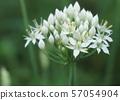 Nira Flower 57054904