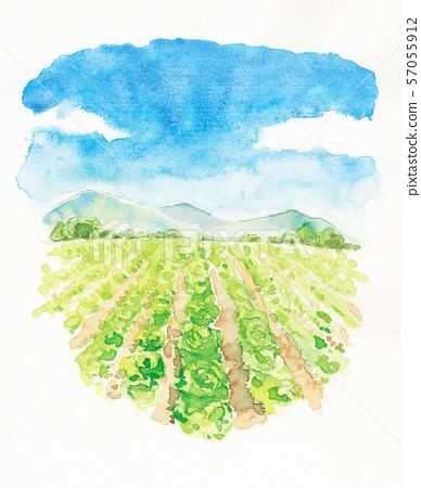 Watercolor landscape _ Plateau lettuce 57055912