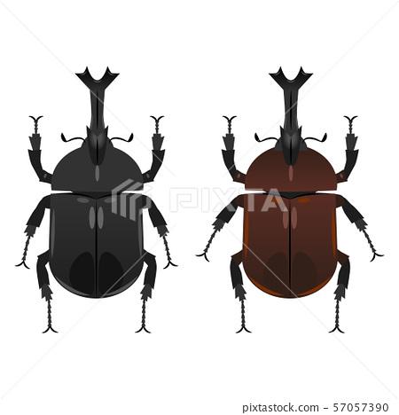 甲蟲 57057390