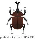 甲蟲 57057391