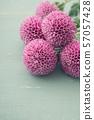 紫色乒乓球菊花 57057428
