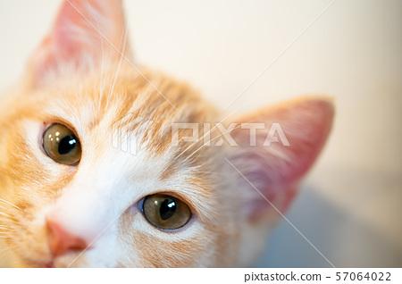 庫存照片:小貓 57064022