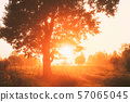 Sunset Sunrise In Misty Forest Landscape. Sun Sunshine With Natural Sunlight Through Oak Wood Tree 57065045
