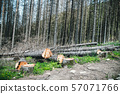 Ecological catastrophy. Illegal deforestation and 57071766