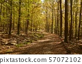 Autumn forest path between trees 57072102