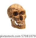 Old archaeological find human skull cranium 57081079
