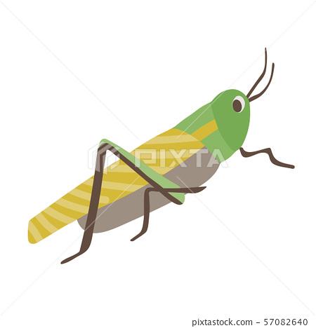 메뚜기 57082640