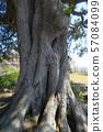 나무 녹나무 녹나무 57084099