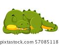 Crocodile sleeping on white background 57085118