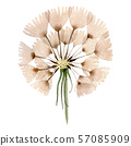 Dandelion blowball with seeds. Watercolor background illustration set. Isolated plant illustration 57085909