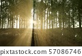 Green bamboo forest in hills 57086746