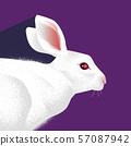 一隻兔子 57087942