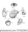 Five human senses. Sketch mouth and eye, nose and ear, hand and brain. Doodle body part vector set 57092842