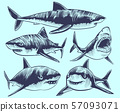 Sketch shark. Swimming sharks with open mouth. Underwater animal vector tattoo collection 57093071